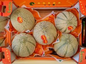 Melone Cantalupo